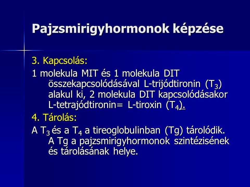 Pajzsmirigyhormonok képzése 3. Kapcsolás: 1 molekula MIT és 1 molekula DIT összekapcsolódásával L-trijódtironin (T 3 ) alakul ki, 2 molekula DIT kapcs