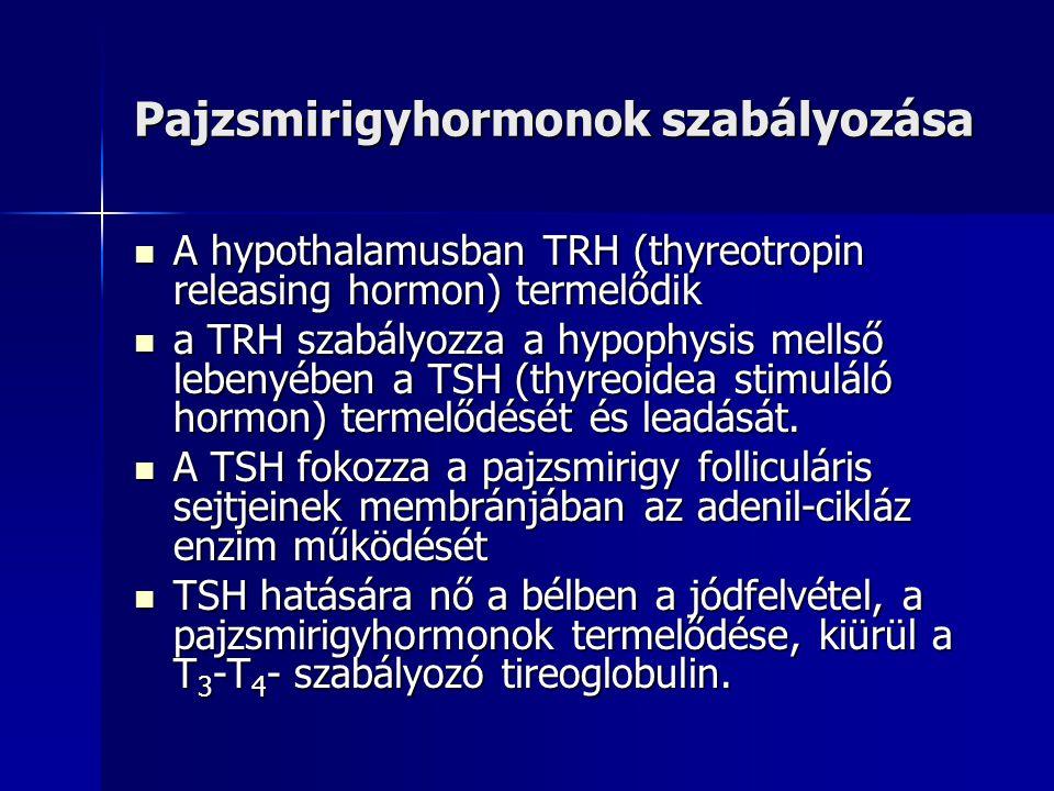 Pajzsmirigyhormonok szabályozása  A hypothalamusban TRH (thyreotropin releasing hormon) termelődik  a TRH szabályozza a hypophysis mellső lebenyében