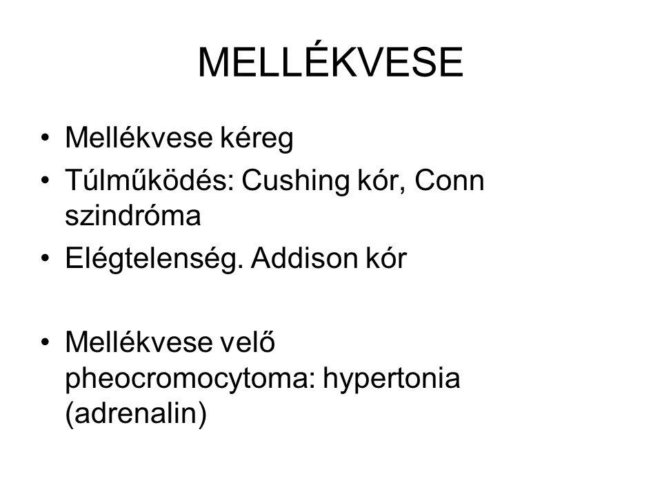 MELLÉKVESE •Mellékvese kéreg •Túlműködés: Cushing kór, Conn szindróma •Elégtelenség. Addison kór •Mellékvese velő pheocromocytoma: hypertonia (adrenal