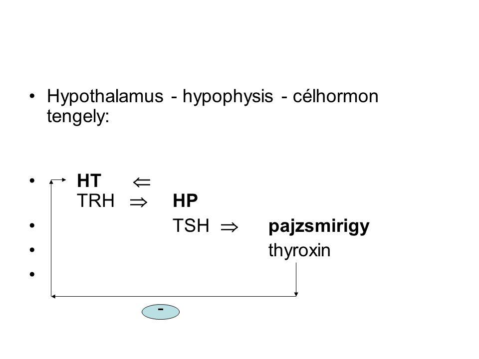 •Hypothalamus - hypophysis - célhormon tengely: •HT  TRH  HP •TSH  pajzsmirigy •thyroxin -