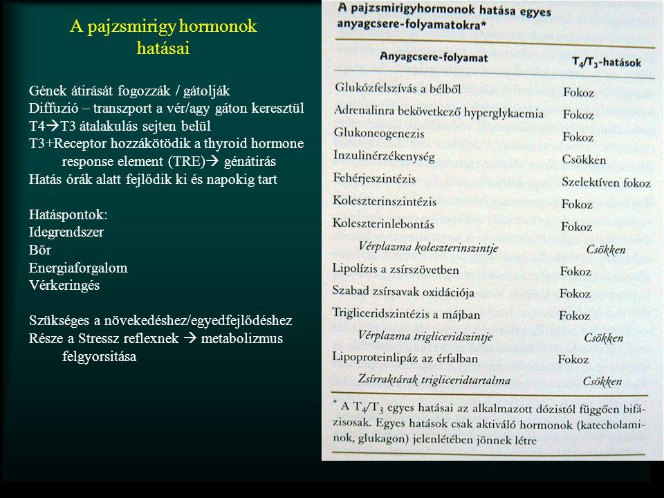 A pajzsmirigy hormonok hatásai Gének átirását fogozzák / gátolják Diffuzió – transzport a vér/agy gáton keresztül T4  T3 átalakulás sejten belül T3+R