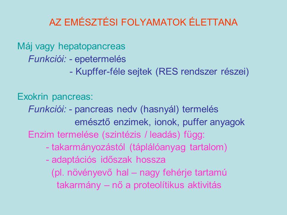 AZ EMÉSZTÉSI FOLYAMATOK ÉLETTANA Máj vagy hepatopancreas Funkciói: - epetermelés - Kupffer-féle sejtek (RES rendszer részei) Exokrin pancreas: Funkció