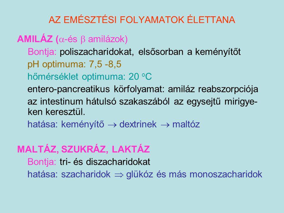 AZ EMÉSZTÉSI FOLYAMATOK ÉLETTANA AMILÁZ (  -és  amilázok) Bontja: poliszacharidokat, elsősorban a keményítőt pH optimuma: 7,5 -8,5 hőmérséklet optim
