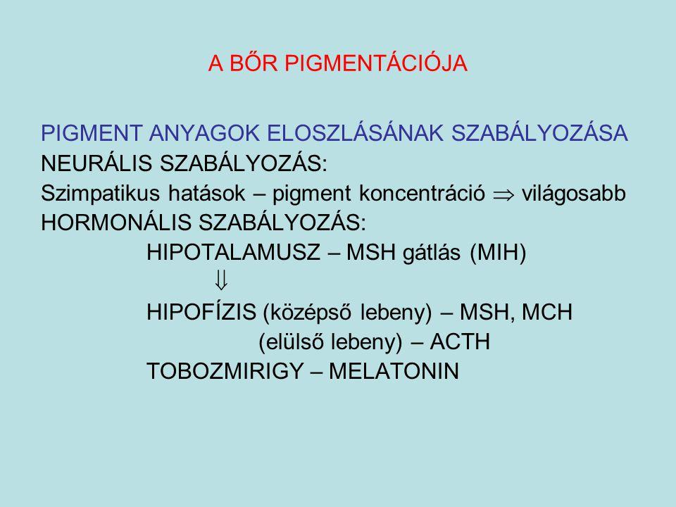 PIGMENT ANYAGOK ELOSZLÁSÁNAK SZABÁLYOZÁSA NEURÁLIS SZABÁLYOZÁS: Szimpatikus hatások – pigment koncentráció  világosabb HORMONÁLIS SZABÁLYOZÁS: HIPOTA