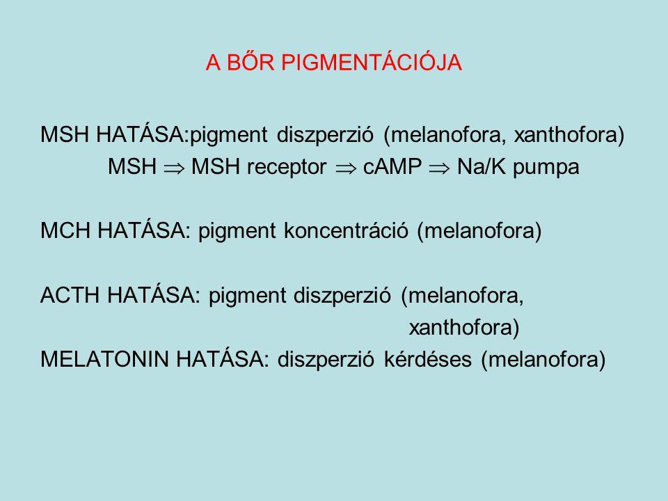MSH HATÁSA:pigment diszperzió (melanofora, xanthofora) MSH  MSH receptor  cAMP  Na/K pumpa MCH HATÁSA: pigment koncentráció (melanofora) ACTH HATÁS