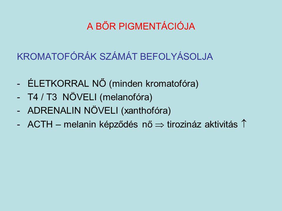 A BŐR PIGMENTÁCIÓJA KROMATOFÓRÁK SZÁMÁT BEFOLYÁSOLJA -ÉLETKORRAL NŐ (minden kromatofóra) -T4 / T3 NÖVELI (melanofóra) -ADRENALIN NÖVELI (xanthofóra) -