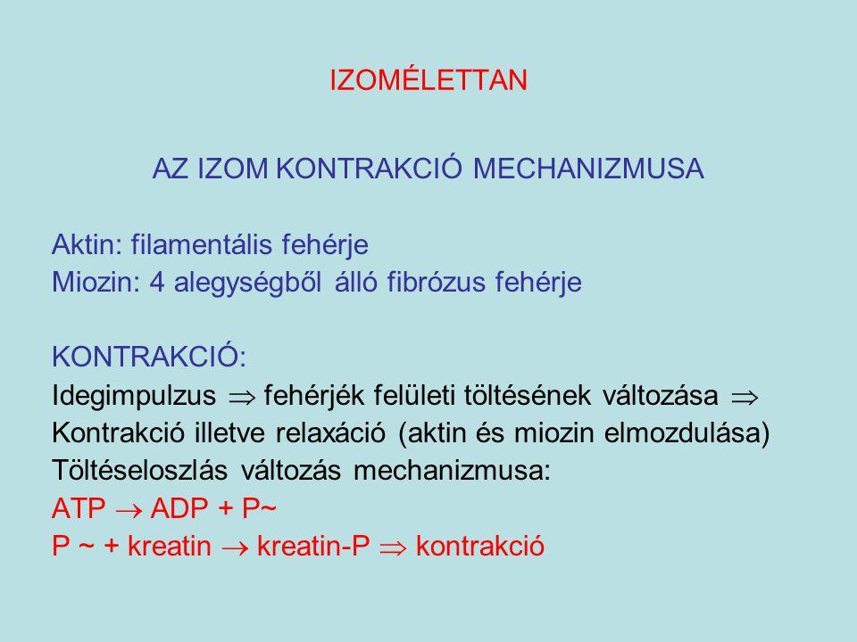 IZOMÉLETTAN AZ IZOM KONTRAKCIÓ MECHANIZMUSA Aktin: filamentális fehérje Miozin: 4 alegységből álló fibrózus fehérje KONTRAKCIÓ: Idegimpulzus  fehérjé
