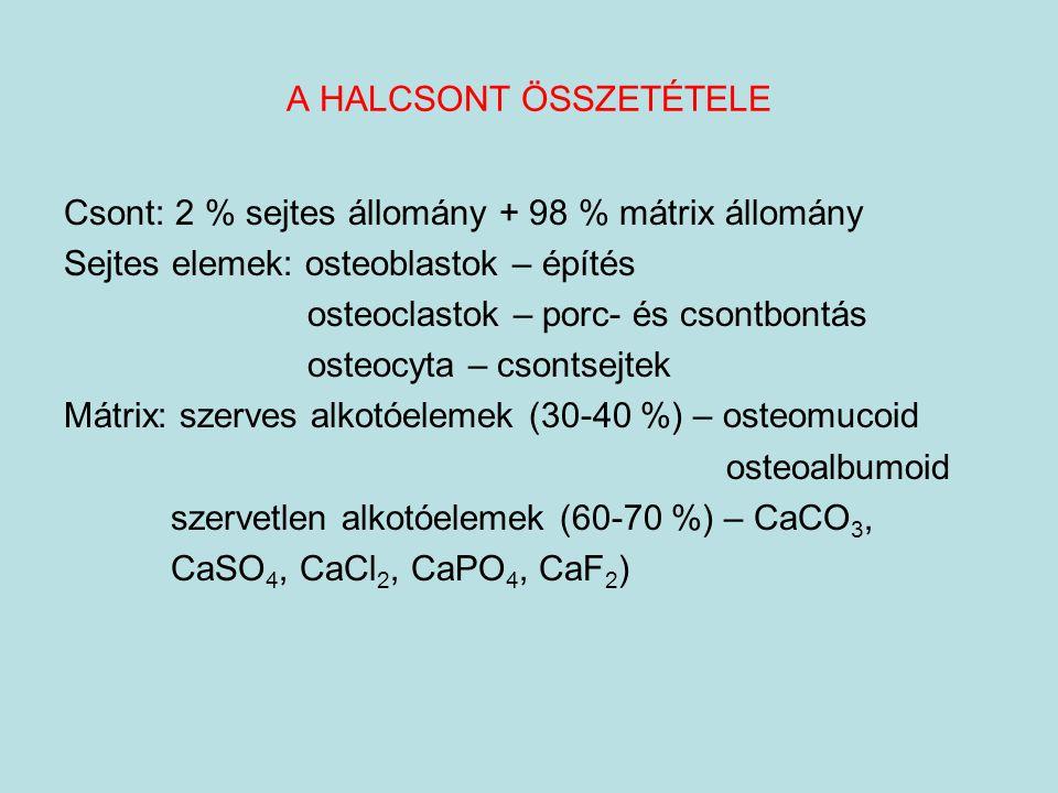 A HALCSONT ÖSSZETÉTELE Csont: 2 % sejtes állomány + 98 % mátrix állomány Sejtes elemek: osteoblastok – építés osteoclastok – porc- és csontbontás oste