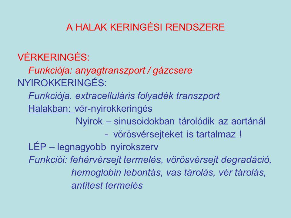 A HALAK KERINGÉSI RENDSZERE VÉRKERINGÉS: Funkciója: anyagtranszport / gázcsere NYIROKKERINGÉS: Funkciója. extracelluláris folyadék transzport Halakban
