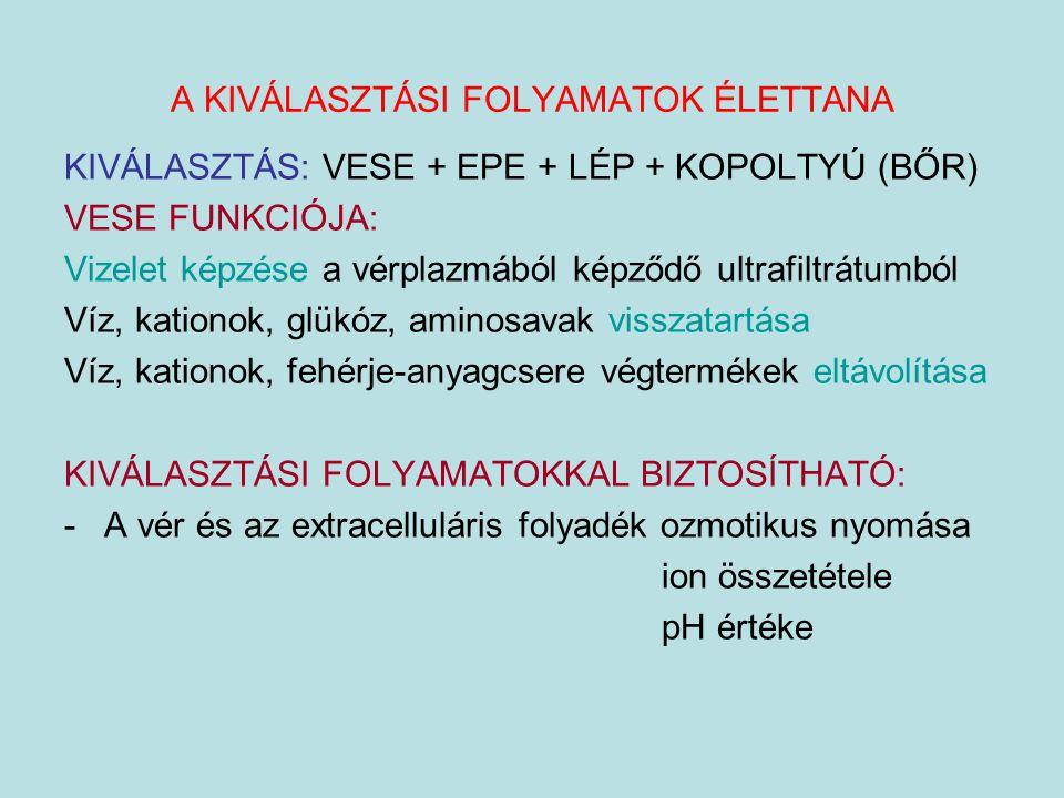 A KIVÁLASZTÁSI FOLYAMATOK ÉLETTANA KIVÁLASZTÁS: VESE + EPE + LÉP + KOPOLTYÚ (BŐR) VESE FUNKCIÓJA: Vizelet képzése a vérplazmából képződő ultrafiltrátu