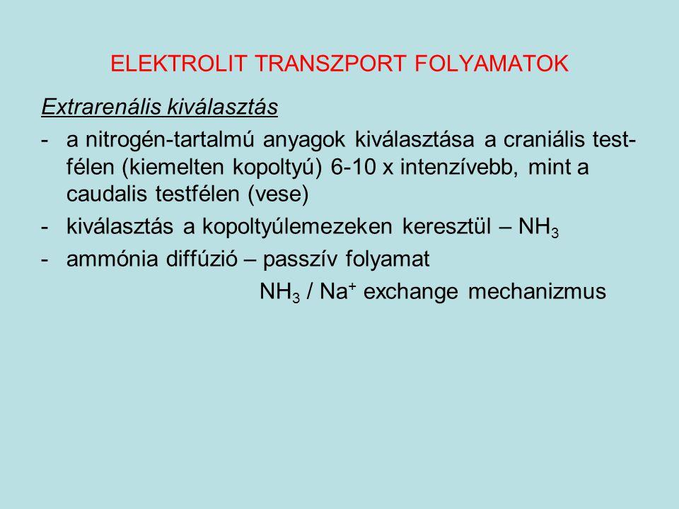 ELEKTROLIT TRANSZPORT FOLYAMATOK Extrarenális kiválasztás -a nitrogén-tartalmú anyagok kiválasztása a craniális test- félen (kiemelten kopoltyú) 6-10