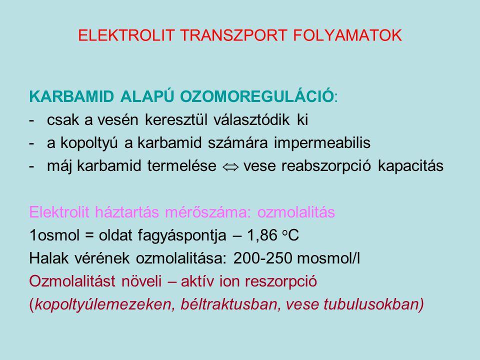 ELEKTROLIT TRANSZPORT FOLYAMATOK KARBAMID ALAPÚ OZOMOREGULÁCIÓ: -csak a vesén keresztül választódik ki -a kopoltyú a karbamid számára impermeabilis -m