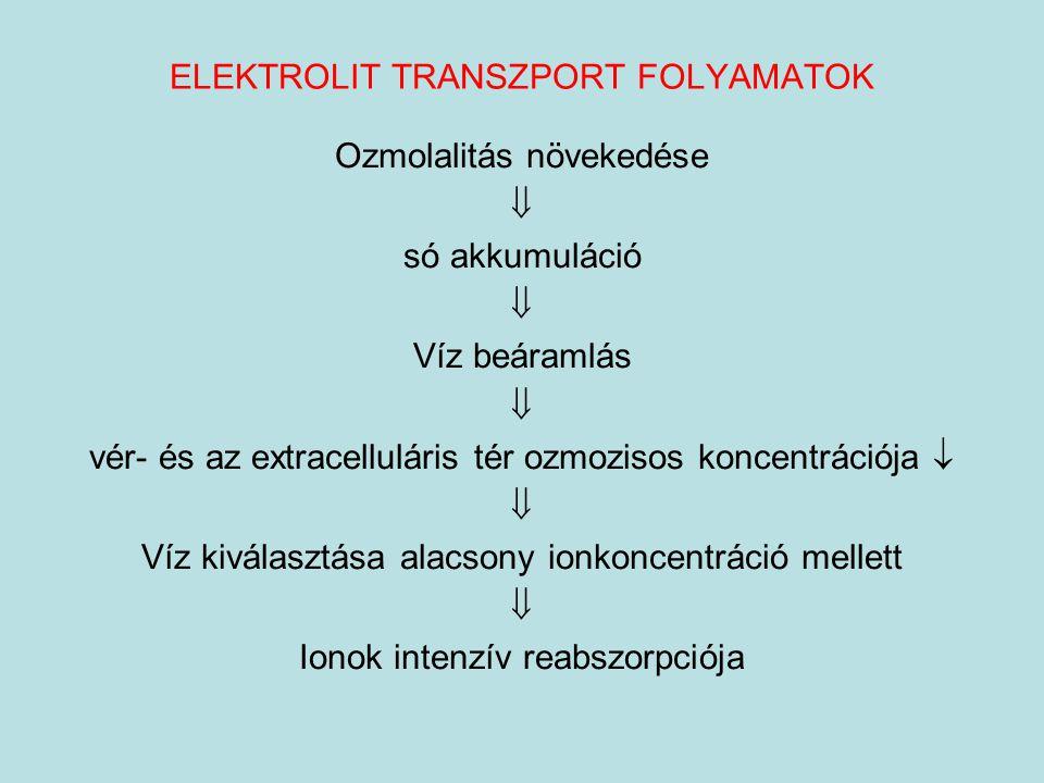 ELEKTROLIT TRANSZPORT FOLYAMATOK Ozmolalitás növekedése  só akkumuláció  Víz beáramlás  vér- és az extracelluláris tér ozmozisos koncentrációja  