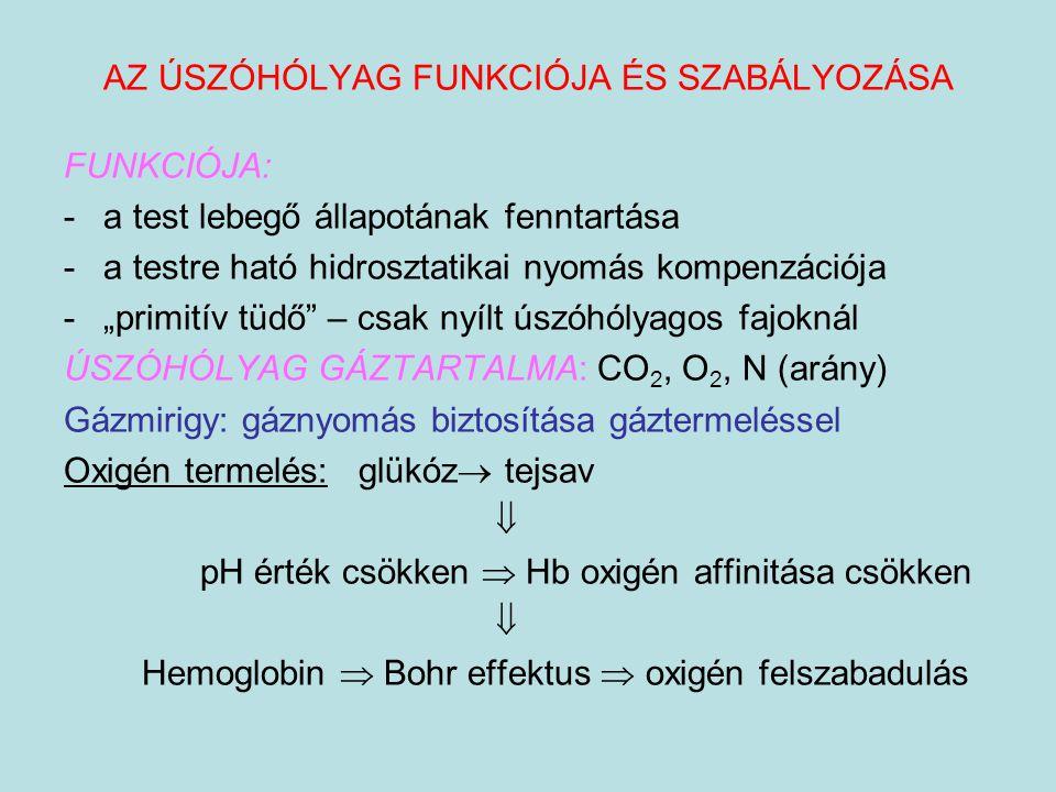"""AZ ÚSZÓHÓLYAG FUNKCIÓJA ÉS SZABÁLYOZÁSA FUNKCIÓJA: -a test lebegő állapotának fenntartása -a testre ható hidrosztatikai nyomás kompenzációja -""""primití"""