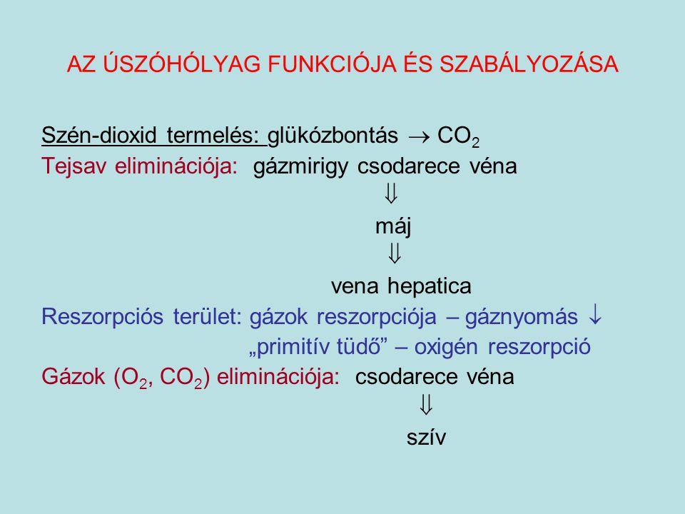 Szén-dioxid termelés: glükózbontás  CO 2 Tejsav eliminációja: gázmirigy csodarece véna  máj  vena hepatica Reszorpciós terület: gázok reszorpciója