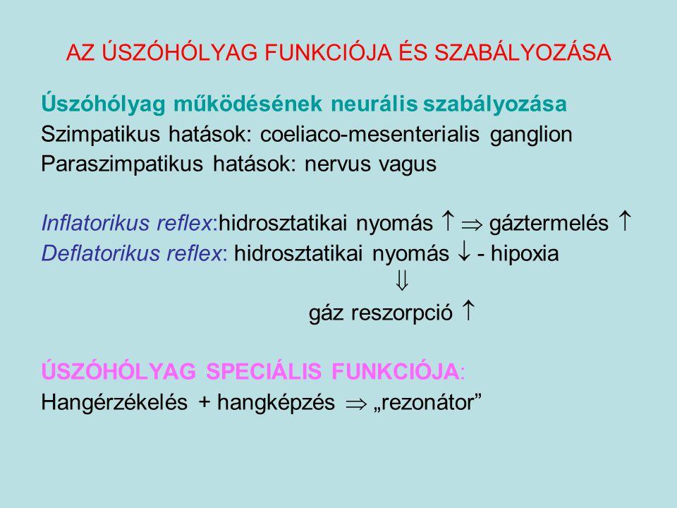 Úszóhólyag működésének neurális szabályozása Szimpatikus hatások: coeliaco-mesenterialis ganglion Paraszimpatikus hatások: nervus vagus Inflatorikus r
