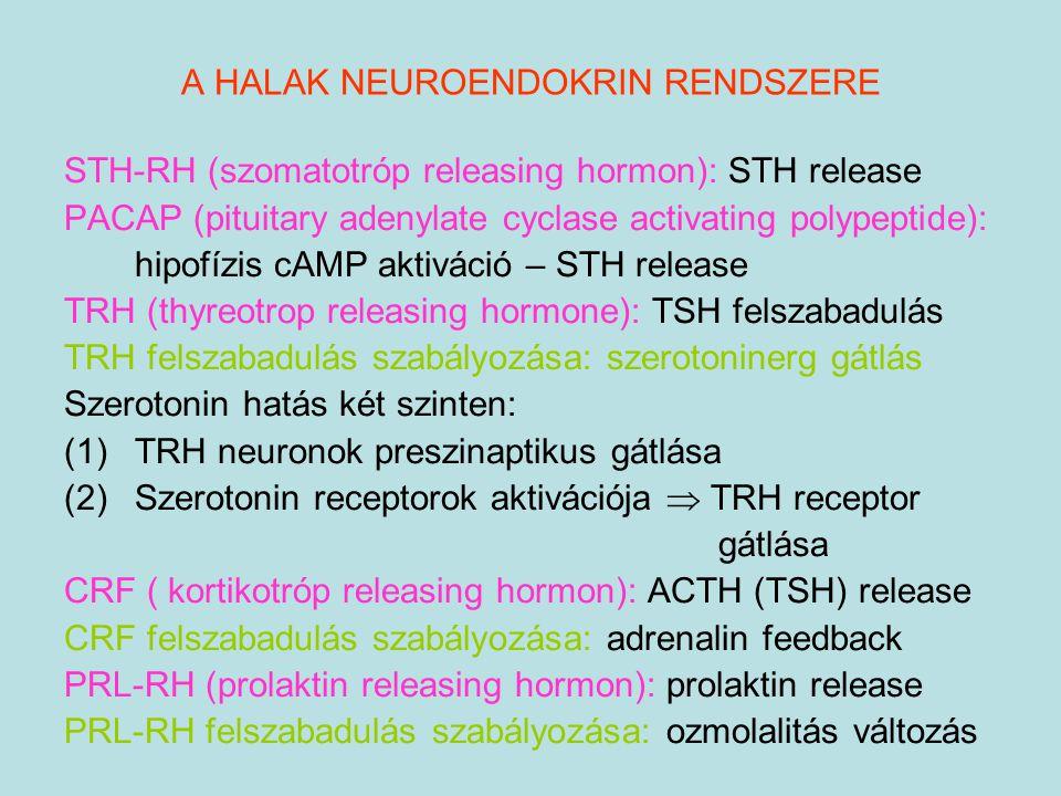 A HALAK NEUROENDOKRIN RENDSZERE STH-RH (szomatotróp releasing hormon): STH release PACAP (pituitary adenylate cyclase activating polypeptide): hipofíz