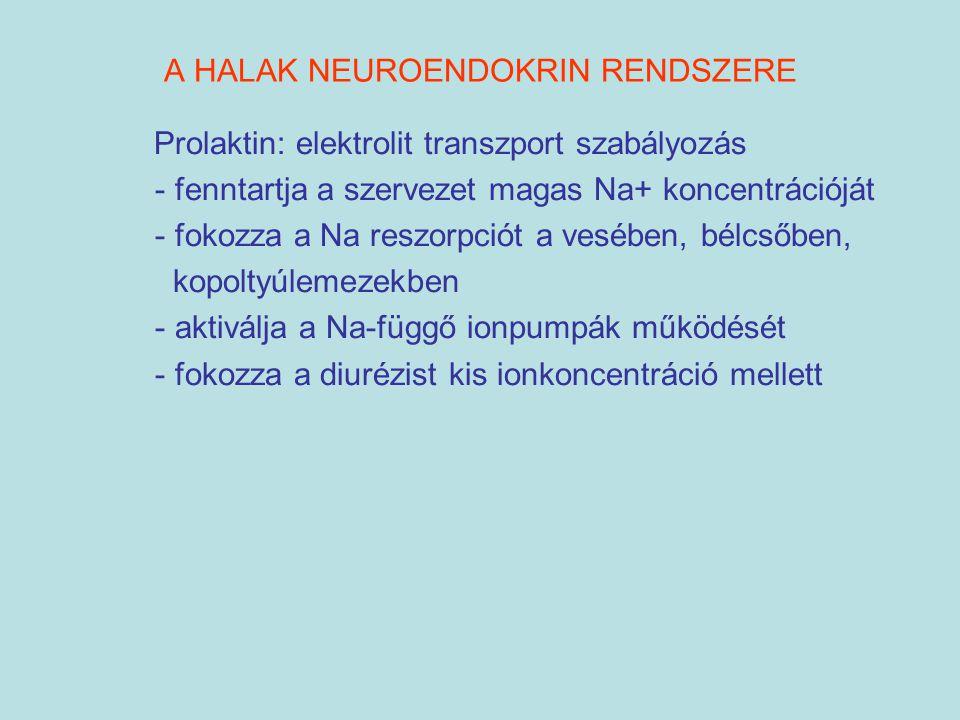 A HALAK NEUROENDOKRIN RENDSZERE Prolaktin: elektrolit transzport szabályozás - fenntartja a szervezet magas Na+ koncentrációját - fokozza a Na reszorp