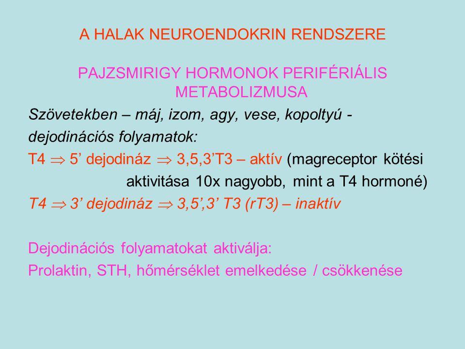 A HALAK NEUROENDOKRIN RENDSZERE PAJZSMIRIGY HORMONOK PERIFÉRIÁLIS METABOLIZMUSA Szövetekben – máj, izom, agy, vese, kopoltyú - dejodinációs folyamatok