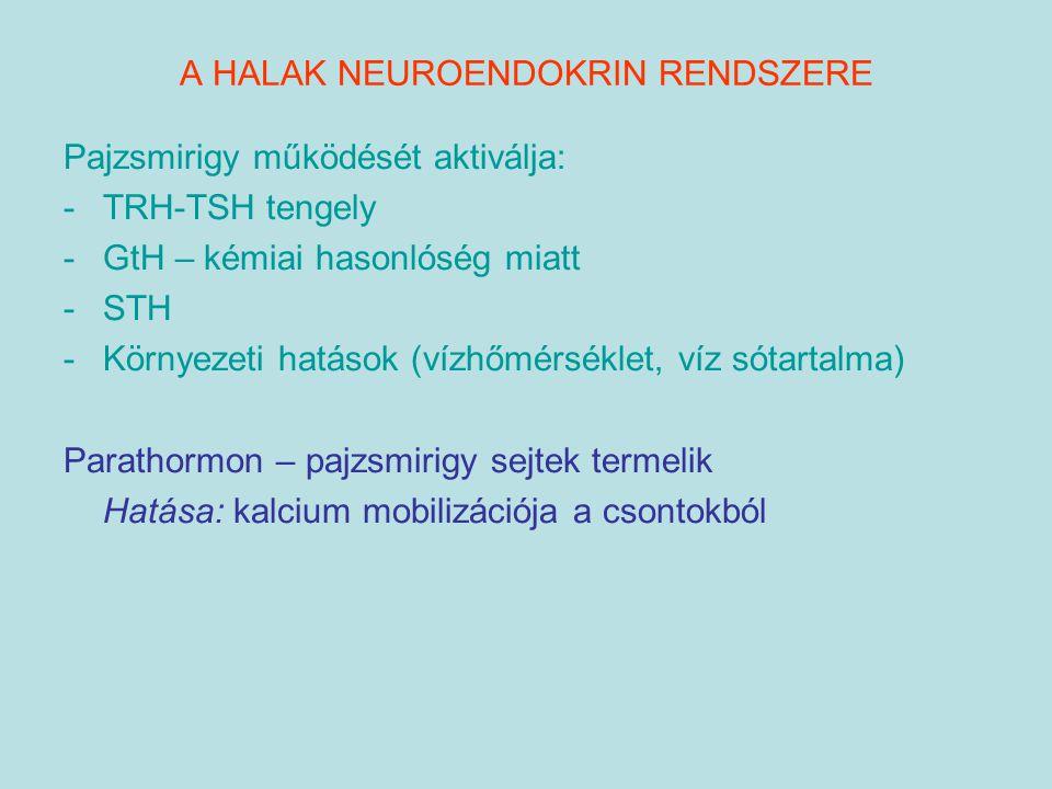 A HALAK NEUROENDOKRIN RENDSZERE Pajzsmirigy működését aktiválja: -TRH-TSH tengely -GtH – kémiai hasonlóség miatt -STH -Környezeti hatások (vízhőmérsék