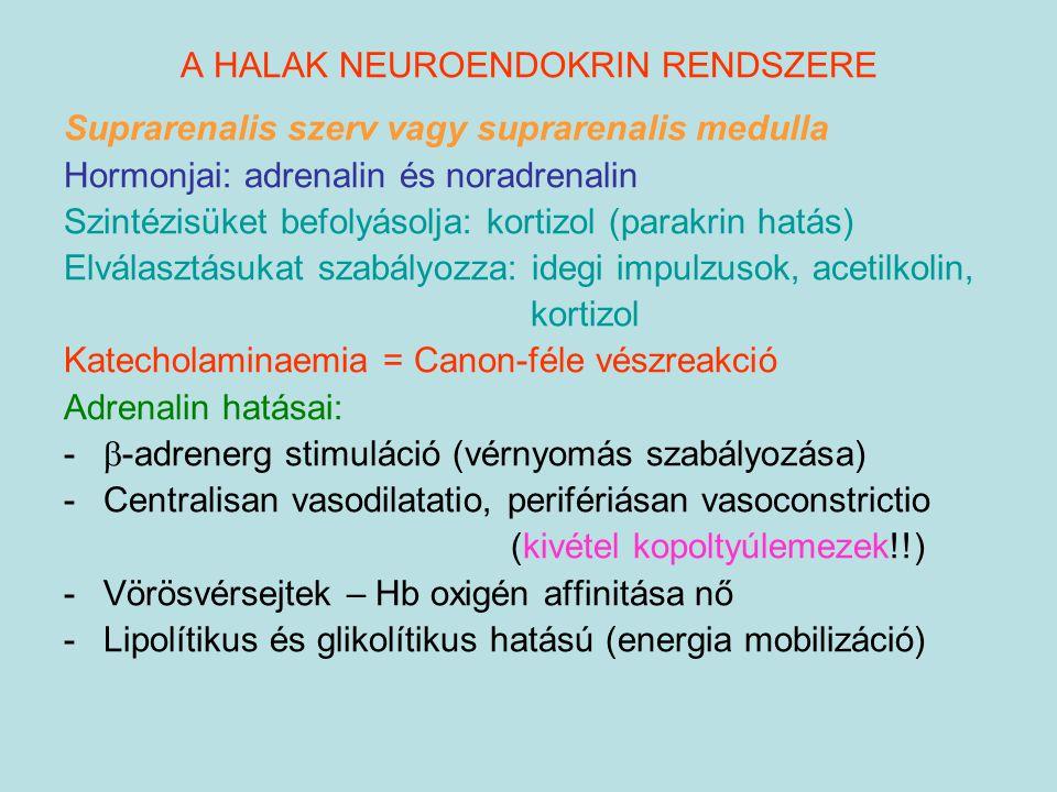 A HALAK NEUROENDOKRIN RENDSZERE Suprarenalis szerv vagy suprarenalis medulla Hormonjai: adrenalin és noradrenalin Szintézisüket befolyásolja: kortizol