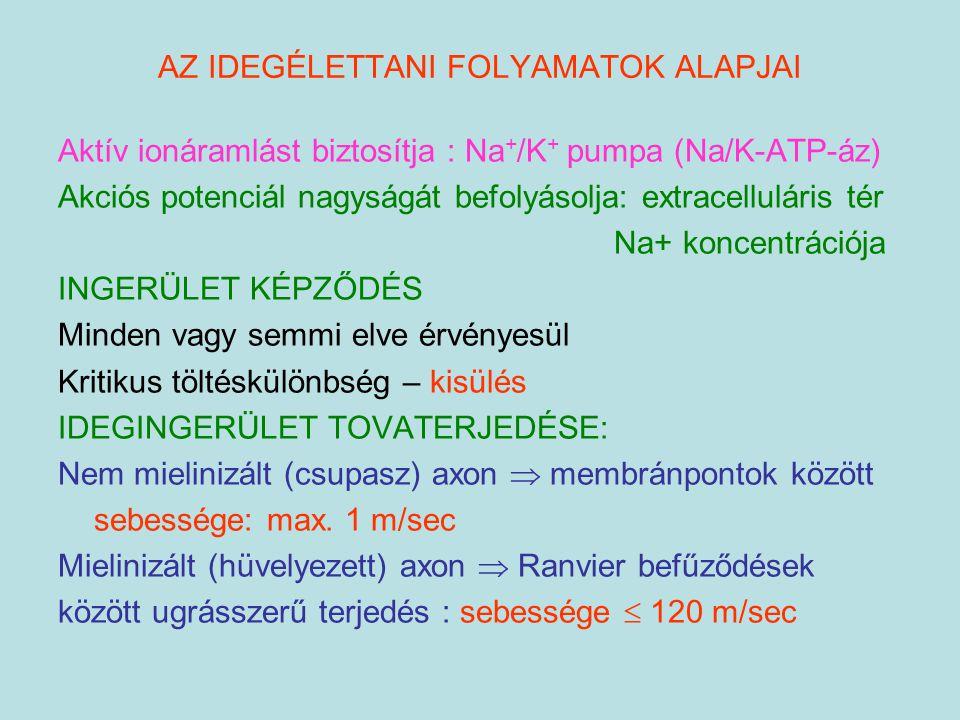 AZ IDEGÉLETTANI FOLYAMATOK ALAPJAI Aktív ionáramlást biztosítja : Na + /K + pumpa (Na/K-ATP-áz) Akciós potenciál nagyságát befolyásolja: extracellulár