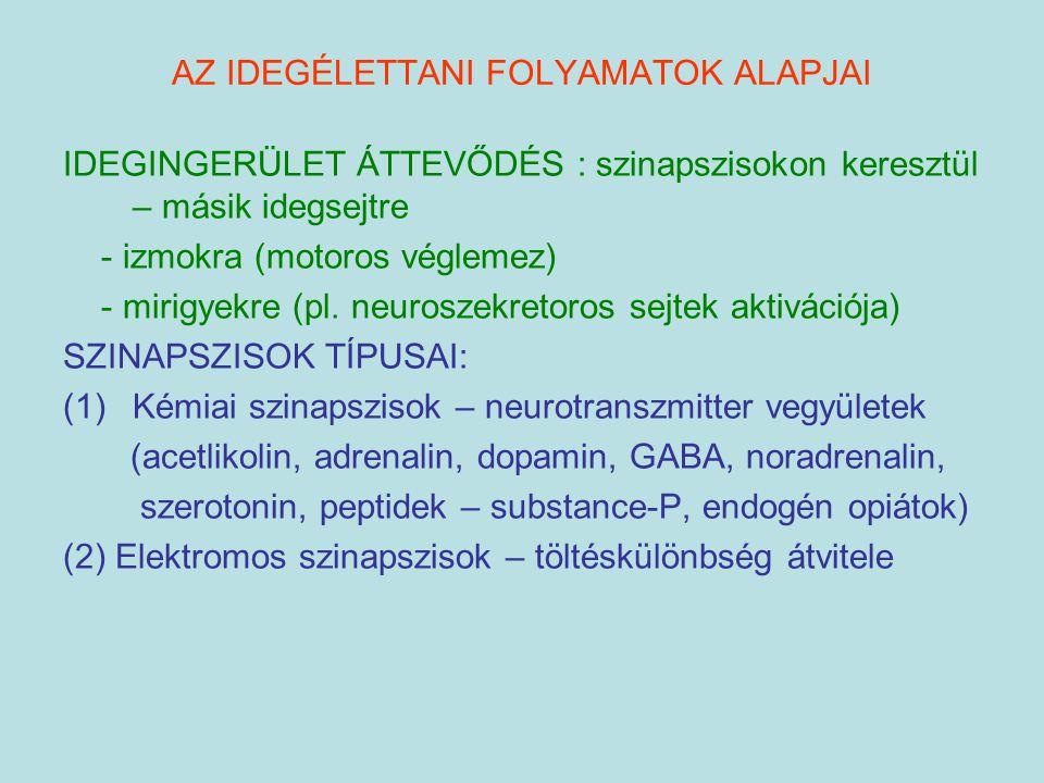 AZ IDEGÉLETTANI FOLYAMATOK ALAPJAI IDEGINGERÜLET ÁTTEVŐDÉS : szinapszisokon keresztül – másik idegsejtre - izmokra (motoros véglemez) - mirigyekre (pl