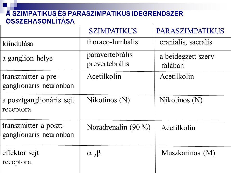 paraszimpatikus idegrendszer szimpatikus idegrendszer