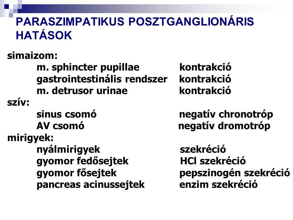 simaizom: m. sphincter pupillae kontrakció gastrointestinális rendszer kontrakció m. detrusor urinae kontrakció szív: sinus csomó negatív chronotróp A