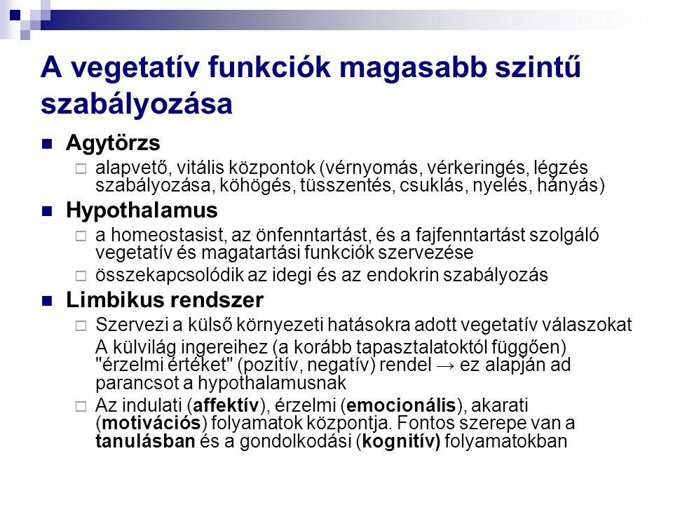 A vegetatív funkciók magasabb szintű szabályozása  Agytörzs  alapvető, vitális központok (vérnyomás, vérkeringés, légzés szabályozása, köhögés, tüss