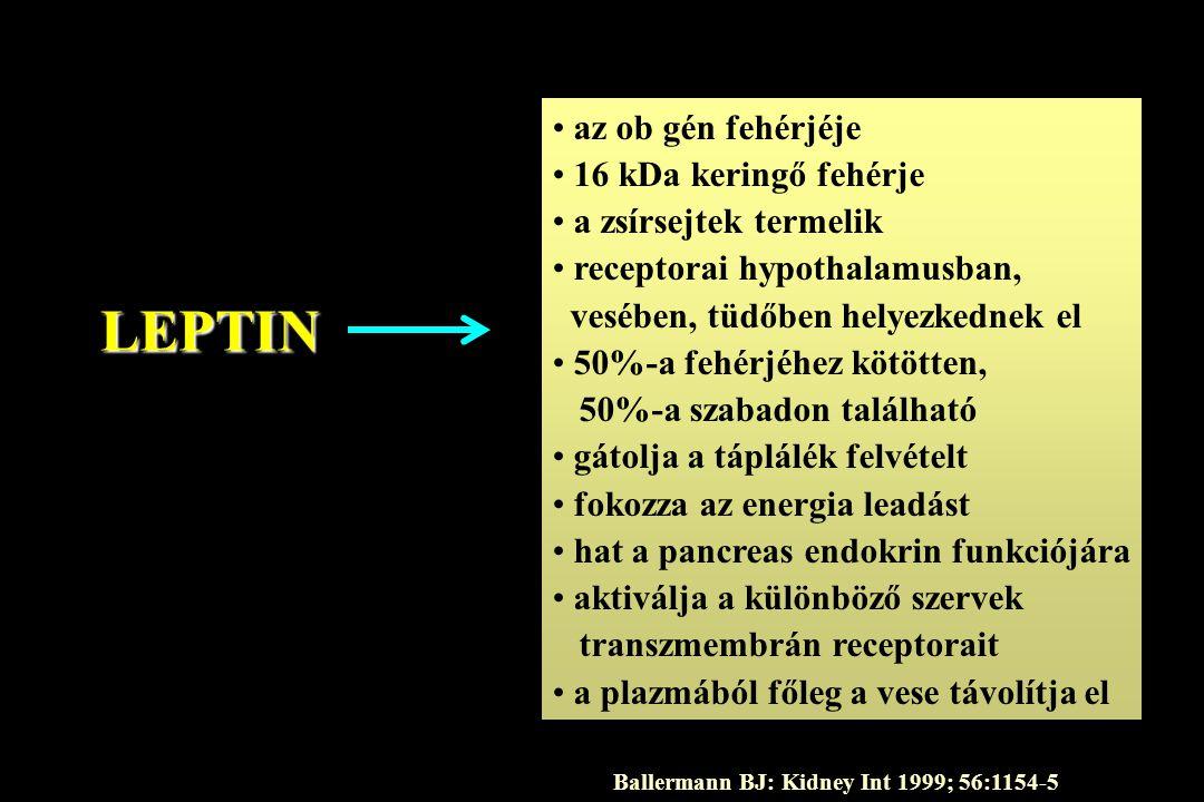 LEPTIN • az ob gén fehérjéje • 16 kDa keringő fehérje • a zsírsejtek termelik • receptorai hypothalamusban, vesében, tüdőben helyezkednek el • 50%-a f