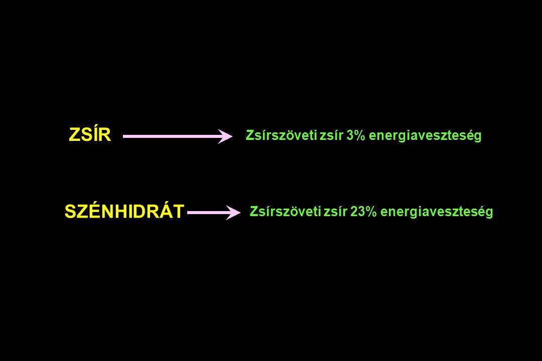 ZSÍR SZÉNHIDRÁT Zsírszöveti zsír 3% energiaveszteség Zsírszöveti zsír 23% energiaveszteség