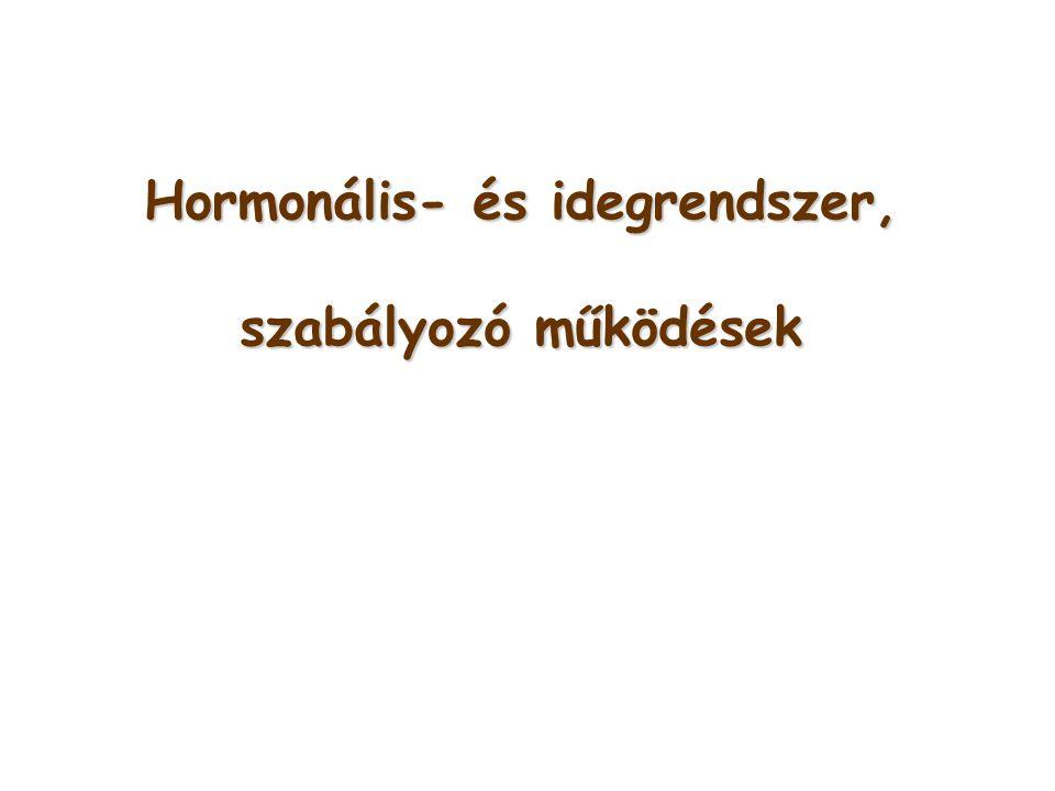 Hormonális- és idegrendszer, szabályozó működések