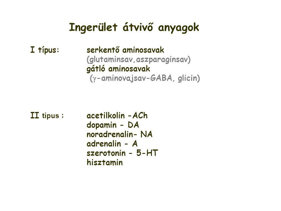 Ingerület átvivő anyagok I típus: serkentő aminosavak (glutaminsav,aszparaginsav) gátló aminosavak (  -aminovajsav-GABA, glicin) II típus : acetilkol