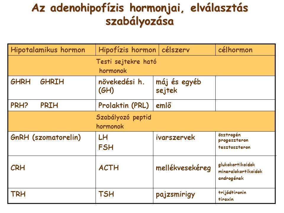 Az adenohipofízis hormonjai, elválasztás szabályozása Hipotalamikus hormonHipofízis hormoncélszervcélhormon Testi sejtekre ható hormonok GHRH GHRIHnöv