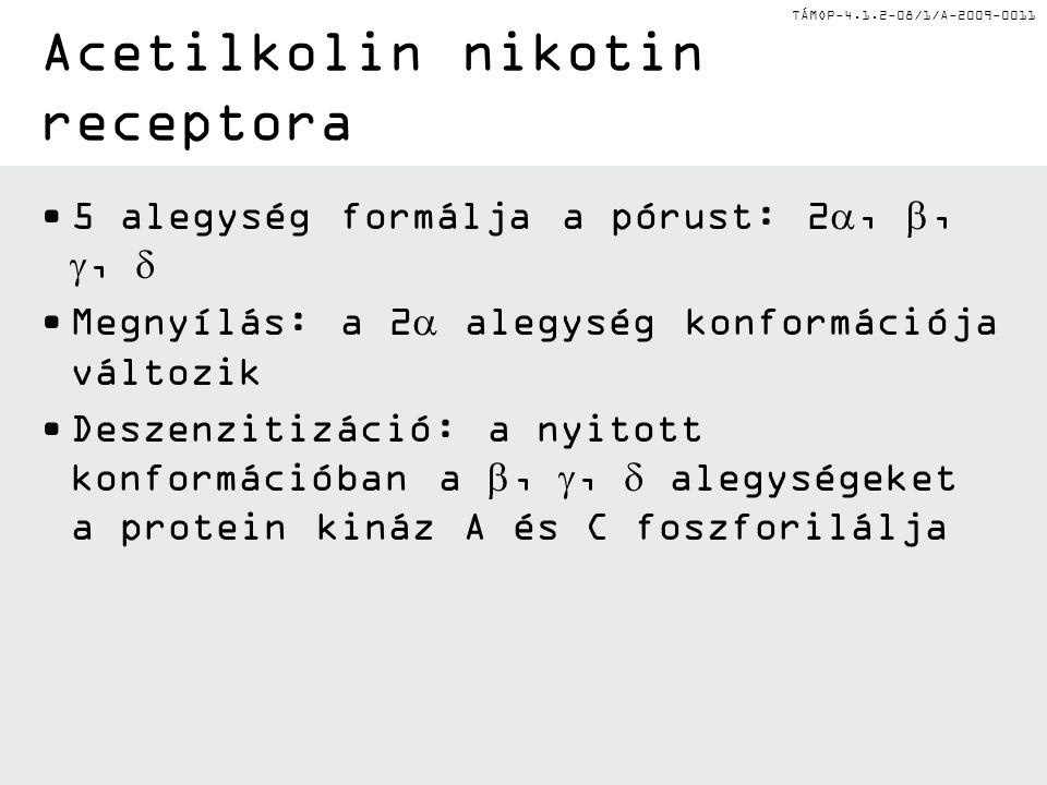 TÁMOP-4.1.2-08/1/A-2009-0011 Acetilkolin nikotin receptoraFelülnézet Elölnézet