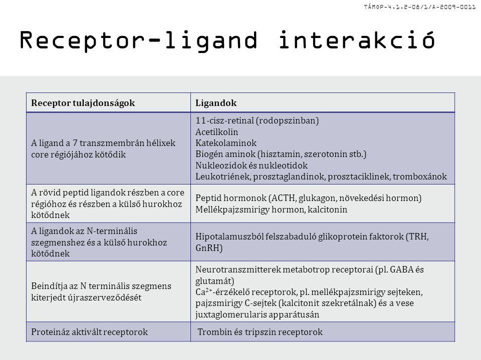 TÁMOP-4.1.2-08/1/A-2009-0011 Ion-csatorna receptorok 1.Cys-hurok receptorok: pentamer szerkezet, 4 transzmembrán (TM) régió/alegység – Acetilkolin (Ach) nikotin receptora: Na + csatorna –GABA A, GABA C, Glicin : Cl - csatorna (gátló szerep a KIR-ben) 2.Glutamát-aktivált kation csatornák: (excitatorikus a KIR-ben): tetramer szerkezet, 3 TM régió/alegység –pl.