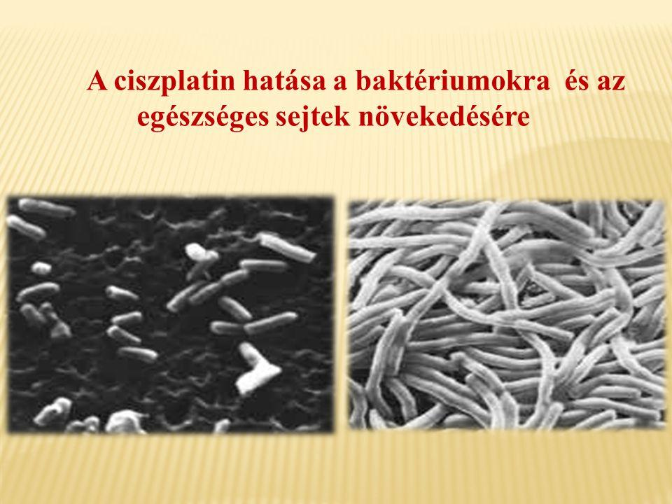 A ciszplatin hatása a baktériumokra és az egészséges sejtek növekedésére