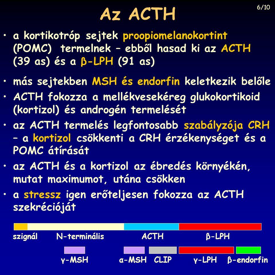 Az ACTH •más sejtekben MSH és endorfin keletkezik belőle •ACTH fokozza a mellékvesekéreg glukokortikoid (kortizol) és androgén termelését •az ACTH termelés legfontosabb szabályzója CRH – a kortizol csökkenti a CRH érzékenységet és a POMC átírását •az ACTH és a kortizol az ébredés környékén, mutat maximumot, utána csökken •a stressz igen erőteljesen fokozza az ACTH szekrécióját ACTHβ-LPHN-terminálisszignál γ-LPHβ-endorfinCLIPα-MSHγ-MSH •a kortikotróp sejtek proopiomelanokortint (POMC) termelnek – ebből hasad ki az ACTH (39 as) és a β-LPH (91 as) 6/10