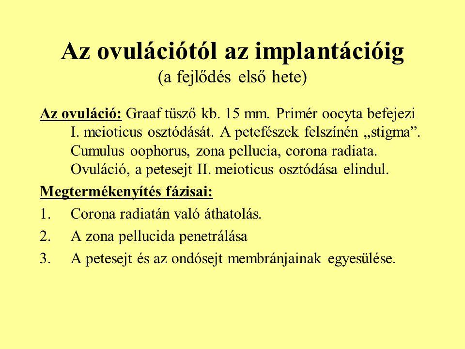 Az ovulációtól az implantációig (a fejlődés első hete) Az ovuláció: Graaf tüsző kb. 15 mm. Primér oocyta befejezi I. meioticus osztódását. A petefésze