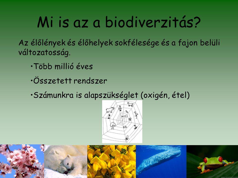 Mi is az a biodiverzitás? Az élőlények és élőhelyek sokfélesége és a fajon belüli változatosság. •Több millió éves •Összetett rendszer •Számunkra is a