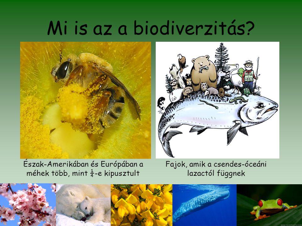 Mi is az a biodiverzitás? Észak-Amerikában és Európában a méhek több, mint ¼-e kipusztult Fajok, amik a csendes-óceáni lazactól függnek