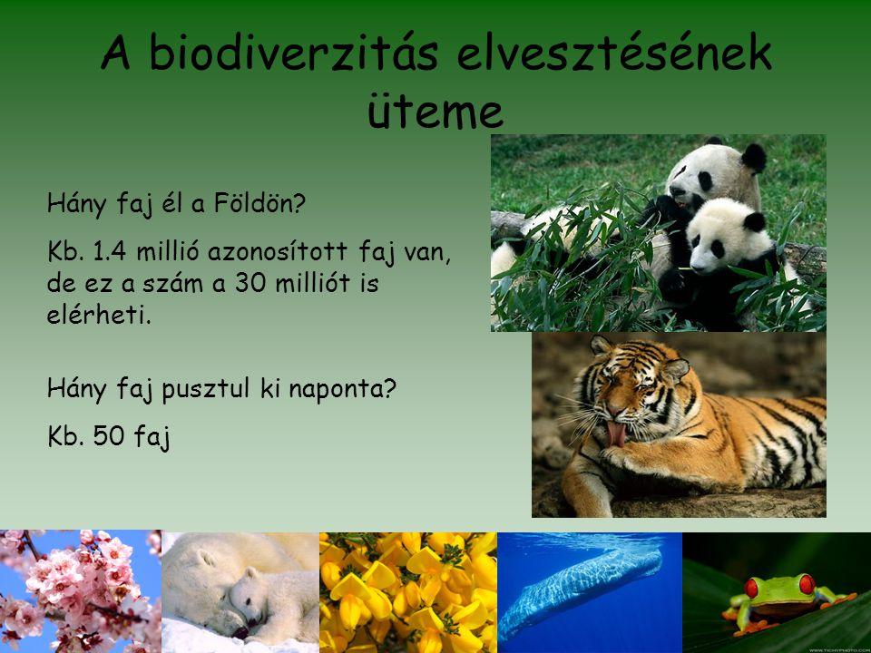 A biodiverzitás elvesztésének üteme Hány faj él a Földön? Kb. 1.4 millió azonosított faj van, de ez a szám a 30 milliót is elérheti. Hány faj pusztul