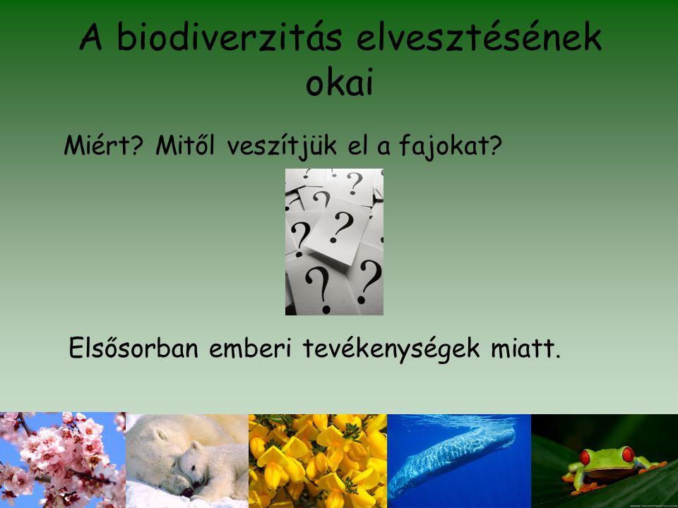 A biodiverzitás elvesztésének okai Miért? Mitől veszítjük el a fajokat? Elsősorban emberi tevékenységek miatt.