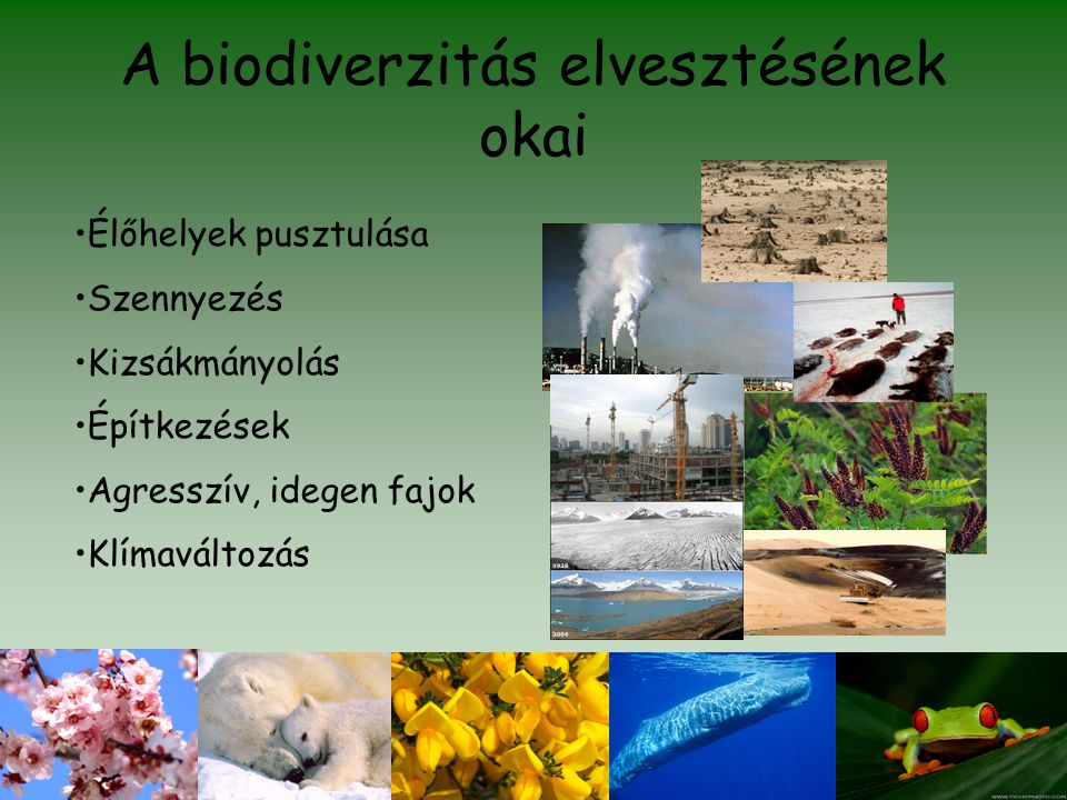 A biodiverzitás elvesztésének okai •Élőhelyek pusztulása •Szennyezés •Kizsákmányolás •Építkezések •Agresszív, idegen fajok •Klímaváltozás