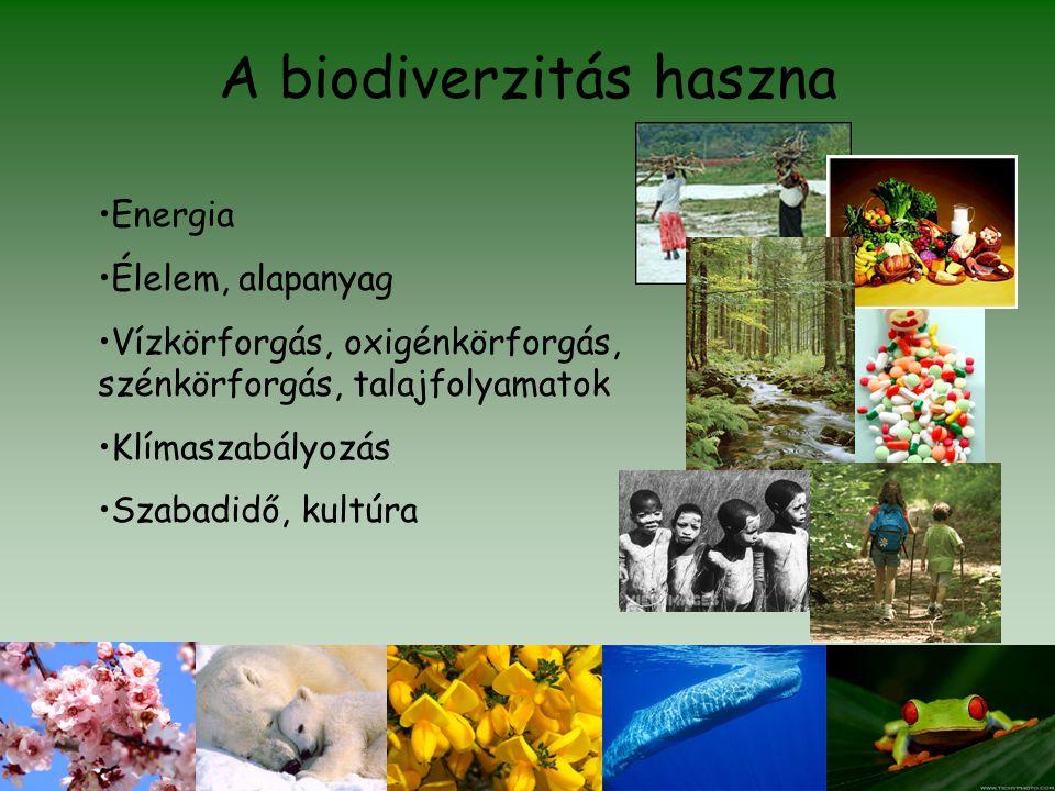 A biodiverzitás haszna •Energia •Élelem, alapanyag •Vízkörforgás, oxigénkörforgás, szénkörforgás, talajfolyamatok •Klímaszabályozás •Szabadidő, kultúr
