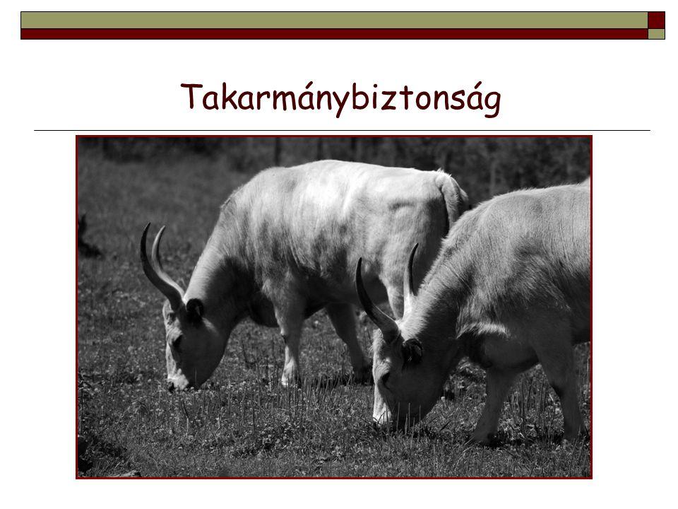  Korszerű, haccp elveken alapuló állatorvosi telepellátás az élelmiszer-biztonságért (KÁTÉ).