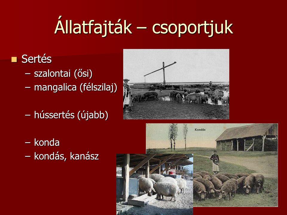 Állatfajták – csoportjuk  Sertés –szalontai (ősi) –mangalica (félszilaj) –hússertés (újabb) –konda –kondás, kanász
