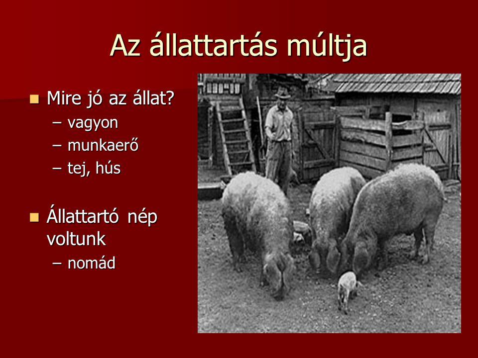 Az állattartás múltja  Mire jó az állat? –vagyon –munkaerő –tej, hús  Állattartó nép voltunk –nomád