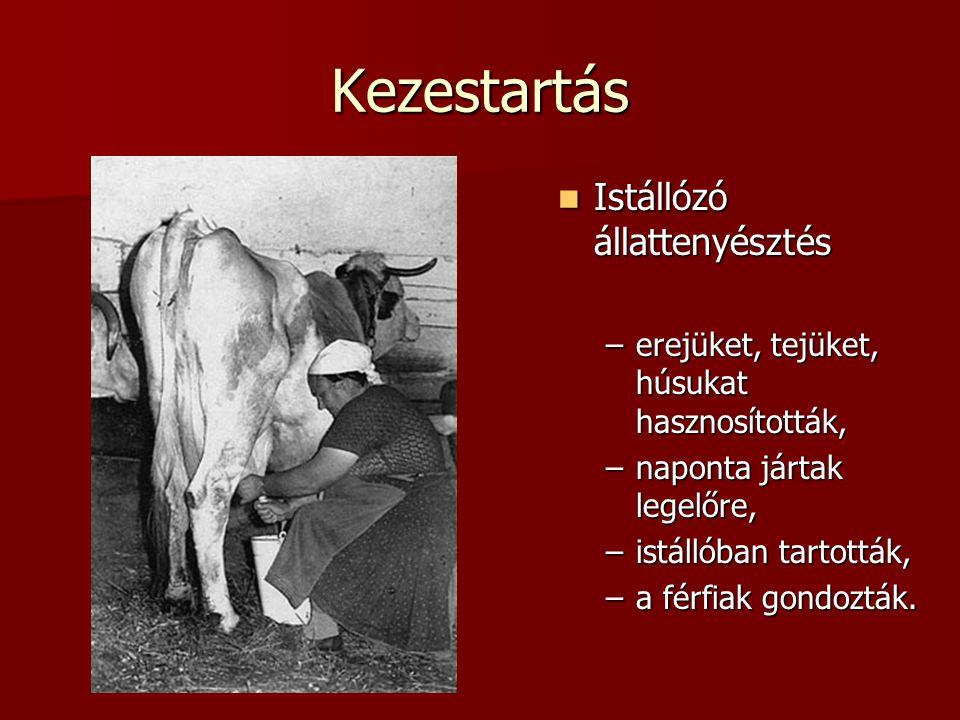 Kezestartás  Istállózó állattenyésztés –erejüket, tejüket, húsukat hasznosították, –naponta jártak legelőre, –istállóban tartották, –a férfiak gondoz